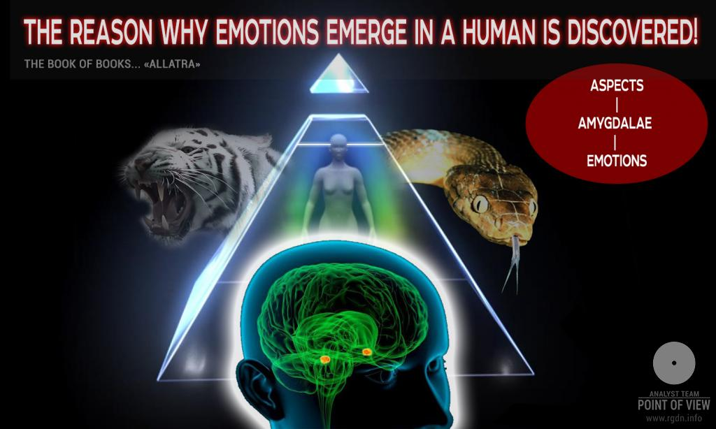 The reason why emotions emerge in a human is discovered! Aspects – amygdalae – emotions
