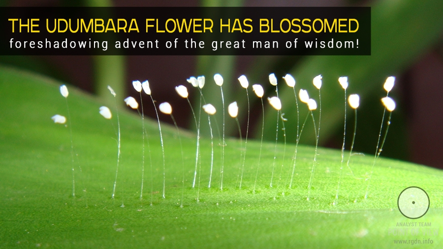 The udumbara flower has blossomed, foreshadowing advent of the great man of wisdom!