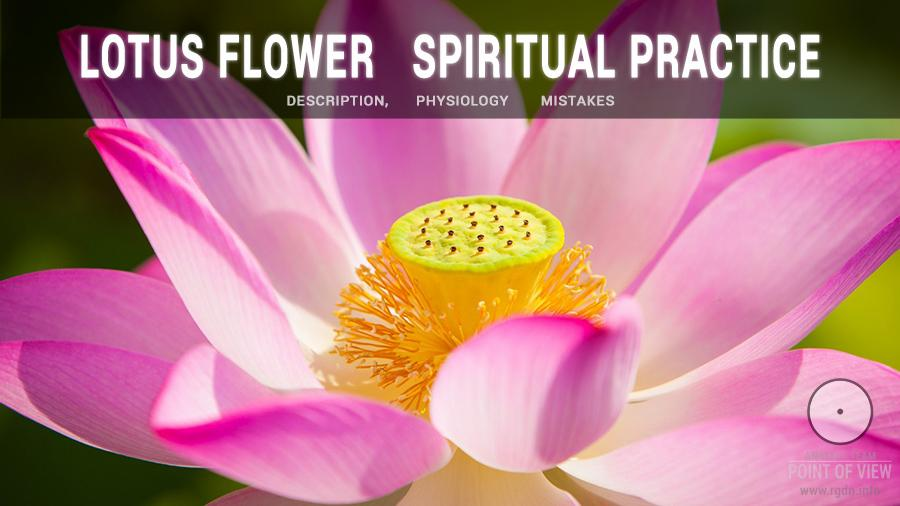 Lotus Flower Spiritual Practice Description Physiology Mistakes