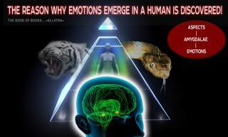 Найдена причина зарождения эмоций человека!  Мозг - миндалины - сущность...