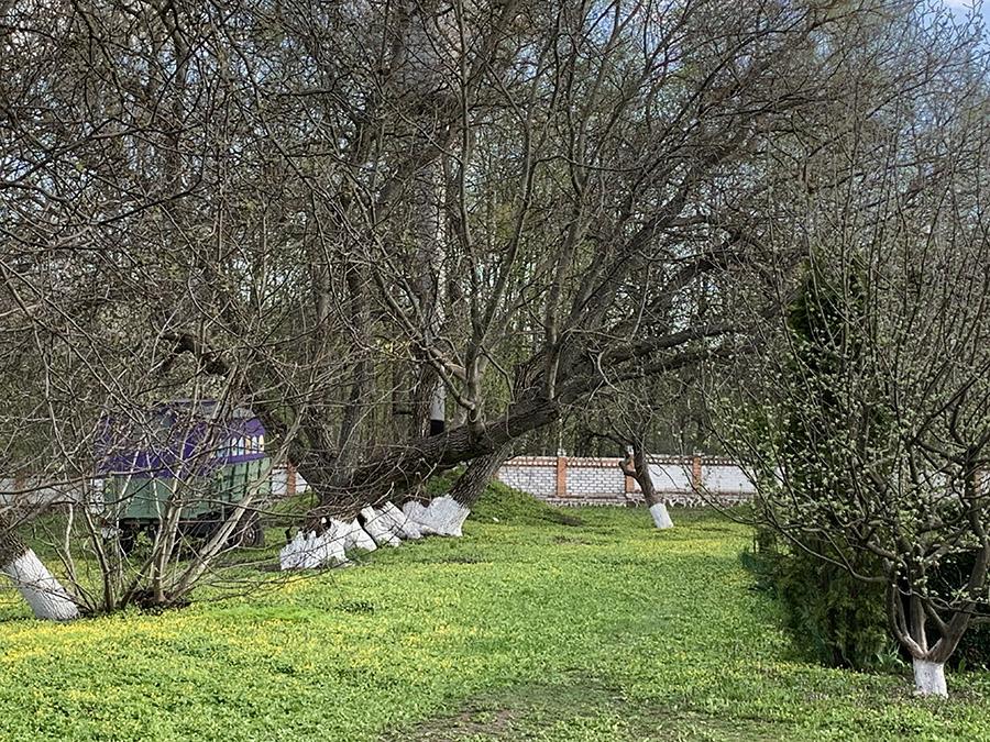деревья в Мотронинском монастыре