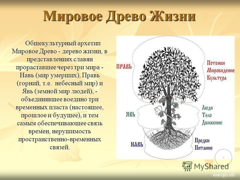 Доклад о мировом древе 1942